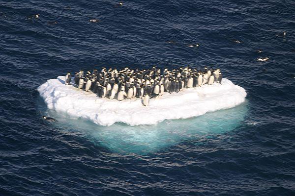 Penguins-global-warming-prevention-33210735-600-400