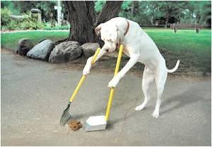 Dog scooping poop.jpg