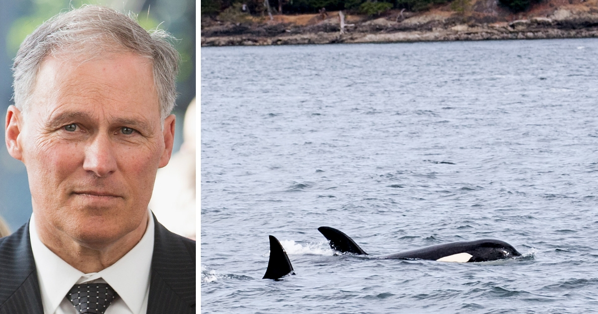 Critics Slam Dem. Gov. for Focusing More on Orcas than Mental Health