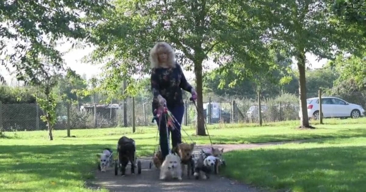 Woman Referred to As 'Miracle Worker' After Helping Paralyzed Rescue Dogs Walk Again