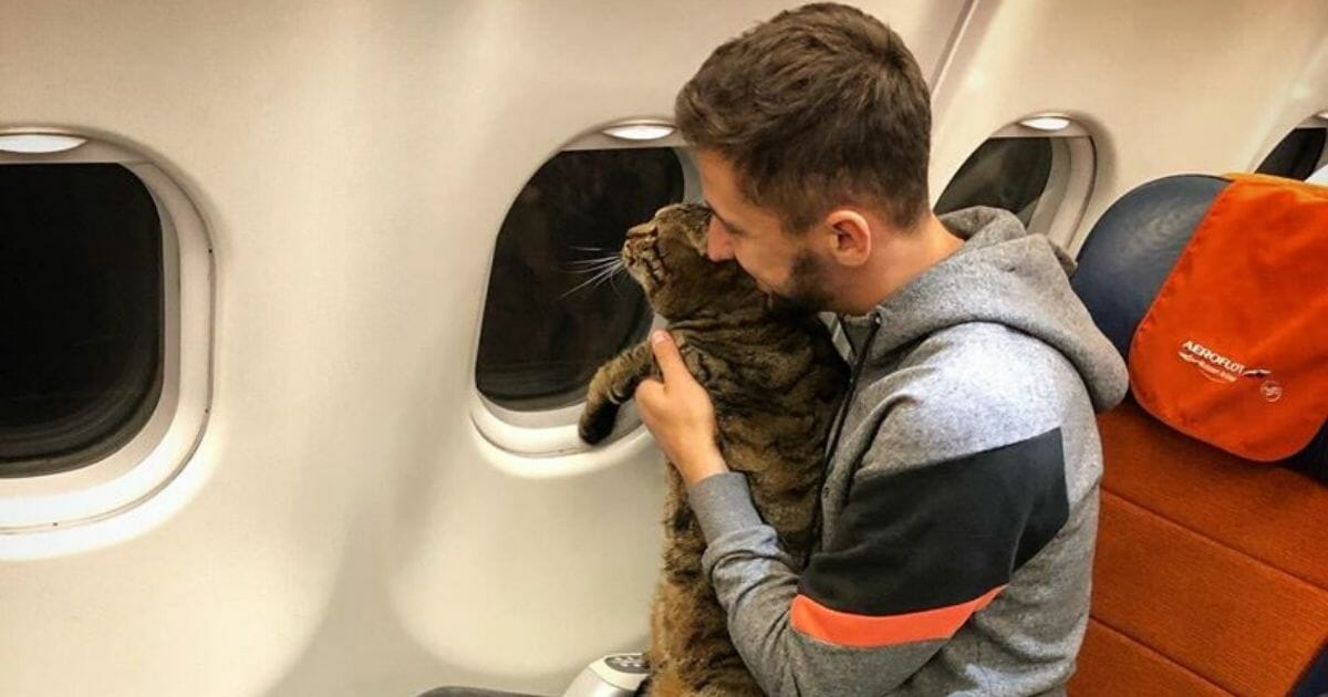 Man Uses Feline Body Double To Sneak Cat Too Fat for Flight onto Plane