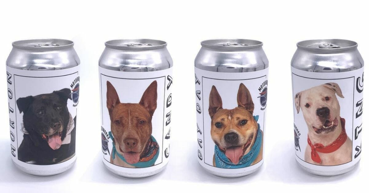 Brewery Features Shelter Dogs on Cans To Help Find Them Their Forever Homes