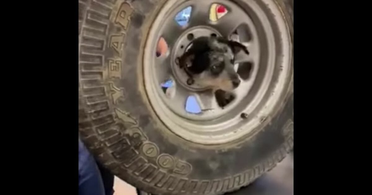 Firefighters Pull Off Incredible Rescue After 3-Month-Old Puppy Gets Head Stuck in Rim of Wheel