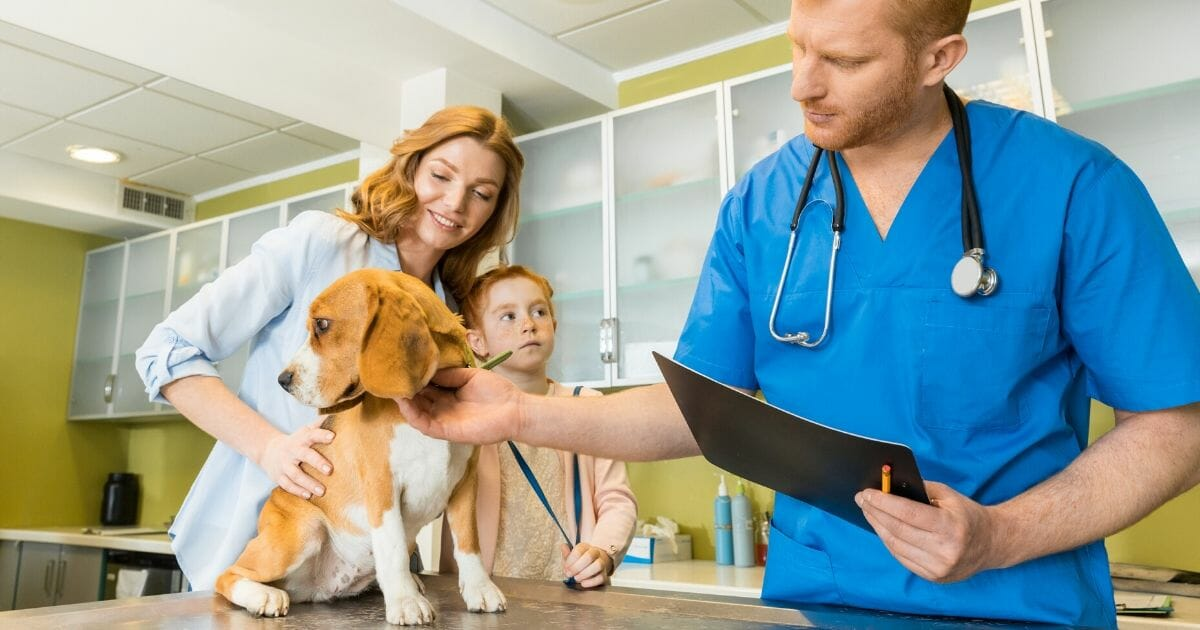 Could Your Furry Friend Catch the Coronavirus? Many Owners Are Taking Precautions