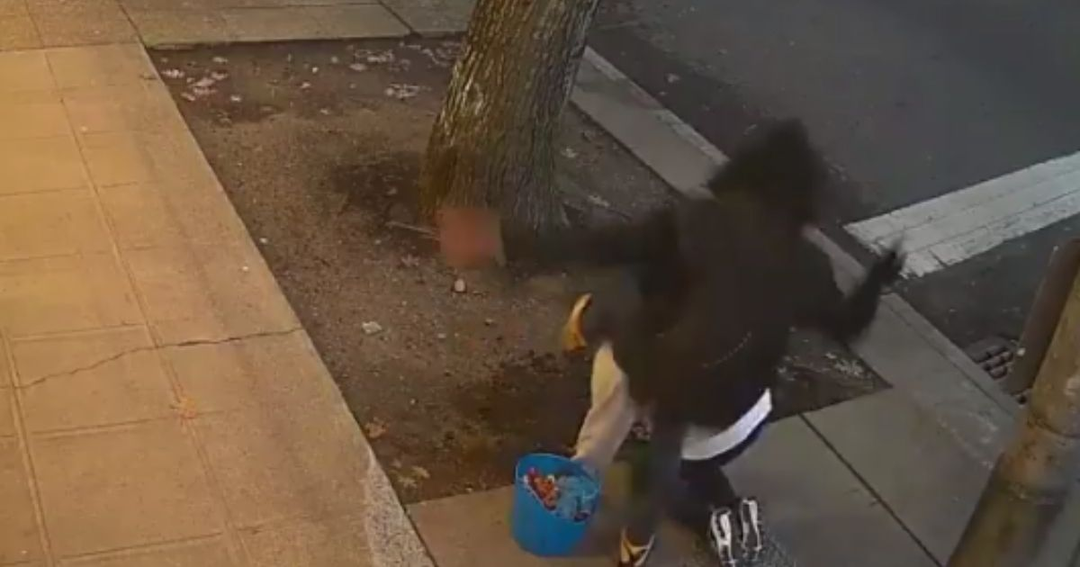 Security Camera Catches Vicious Assault on Gardener Beautifying City Street